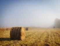 Туманное утро на поле накошенном осенью Стоковые Изображения