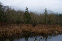 Туманное утро на пруде бобра Стоковое фото RF