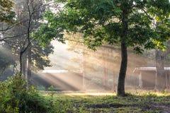 Туманное утро с солнечным лучом в зеленом лесе Стоковая Фотография RF
