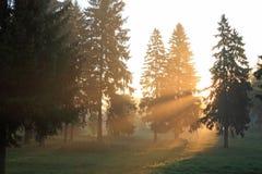 туманное утро Стоковое Изображение RF