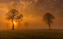 Туманное утро Стоковое фото RF