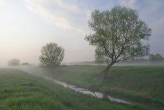 Туманное утро Стоковое Фото