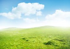 Туманное утро стоковые изображения rf