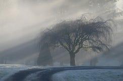 туманное утро стоковые фото