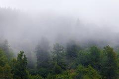 Туманное forrest Стоковые Фотографии RF