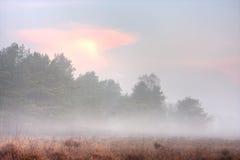 туманно причалите восход солнца стоковое фото