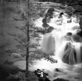 Туманные водопада воды каскада утесы вниз с сосной стоковые изображения rf