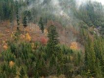 Туманные горные склоны покрытые деревьями Цветы осени стоковое фото rf