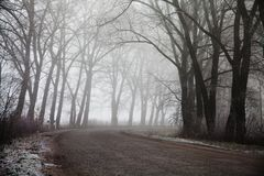 Туманные дорога и деревья Загадочная предпосылка леса Рано утром ландшафт, замораживает на том основании влияние фильма шума Стоковые Изображения