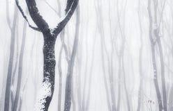 туманные древесины зимы Стоковое Изображение