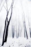 туманные древесины зимы Стоковое фото RF