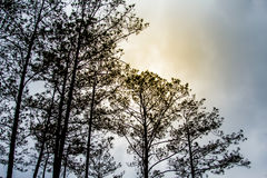 Туманные деревья в лесном дереве покрывают текстура Стоковая Фотография