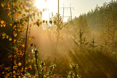 Туманные лес и линии электропередач Стоковое Изображение