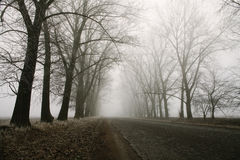 Туманные дорога и деревья скрещивания леса Загадочный ландшафт предпосылки рано утром, замораживает на том основании фильм шума Стоковое Изображение
