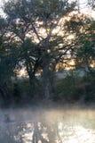 Туманные отражения Стоковые Изображения RF