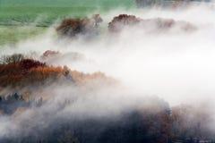 Туманные древесины и поля стоковые изображения