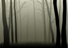 туманные древесины иллюстрация вектора