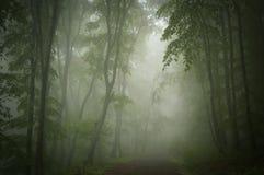Туманные темные ые-зелен древесины с путем Стоковая Фотография RF