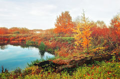 Туманный ландшафт в мягких винтажных цветах - голубое река осени перерастанное с тростниками в туманной погоде Стоковое фото RF