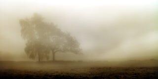 Туманный ландшафт в ноябре Стоковая Фотография RF