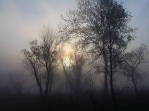 Туманный ландшафт с силуэтом дерева Стоковые Изображения RF