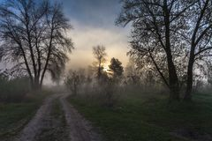 Туманный ландшафт с силуэтом дерева Стоковое Изображение
