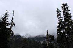 Туманный ландшафт штата Вашингтона стоковая фотография rf