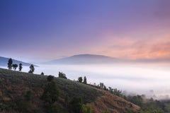 Туманный ландшафт Стоковые Изображения