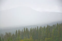 Туманный взгляд леса Стоковая Фотография RF