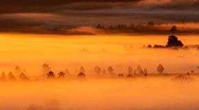 Туманный восход солнца в стране с деревьями стоковое изображение