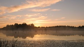 Туманный восход солнца утра на болоте видеоматериал
