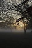 Туманный восход солнца в сельском западном Сассекс, Англии Стоковая Фотография RF