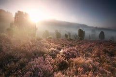 Туманный восход солнца над цветками вереска wirh холмов Стоковые Фотографии RF