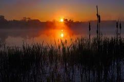 Туманный восход солнца отразил в озере, silhouetting Bulrushes Стоковое Изображение