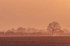 Туманный восход солнца с деревьями на поле Стоковые Фото