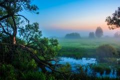 туманный восход солнца стоковое фото
