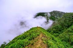 Туманный в rian взгляде леса стоковое фото rf