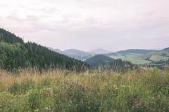 Туманный горный вид утра - винтажный взгляд фильма Стоковое Фото