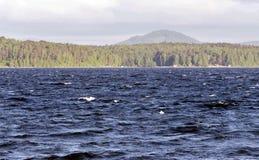Туманный далеко берег озера Стоковая Фотография RF
