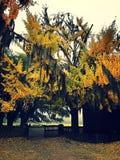 Туманный день осенью стоковые фотографии rf
