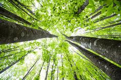 Туманный лес весны Стоковые Изображения