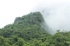 Туманный лес горы Стоковые Изображения