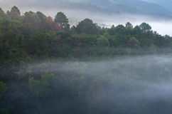 Туманный лес дерева на ландшафте горы Стоковое Фото