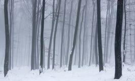 Туманный лес зимы. Стоковые Изображения RF
