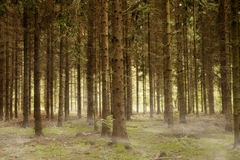 Туманный лес Стоковое Изображение RF