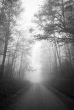 Туманный лес Стоковые Изображения RF