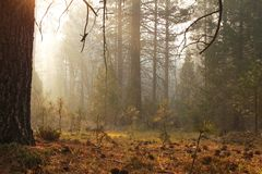 Туманный лес Стоковое фото RF