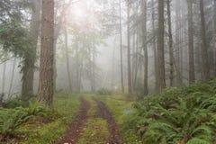 Туманный лес. Стоковая Фотография RF