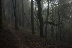 Туманный, жуткий лес стоковое фото rf
