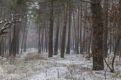 Туманный зимний день в лесе стоковая фотография